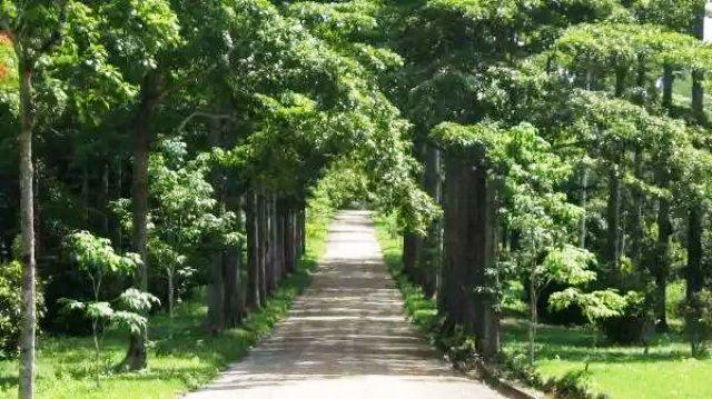 Jardin botanique de Kinshasa