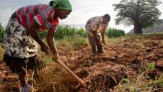 agriculture en rdc