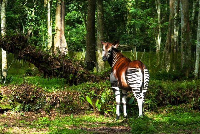 biodiversité en RDC