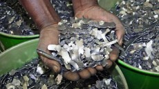 cobalt entre les mains d'un négociant au Katanga