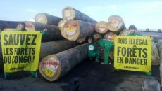 fôret du congo greenpeace