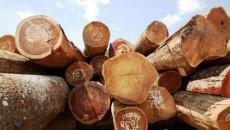 lexploitation-illegale-du-bois