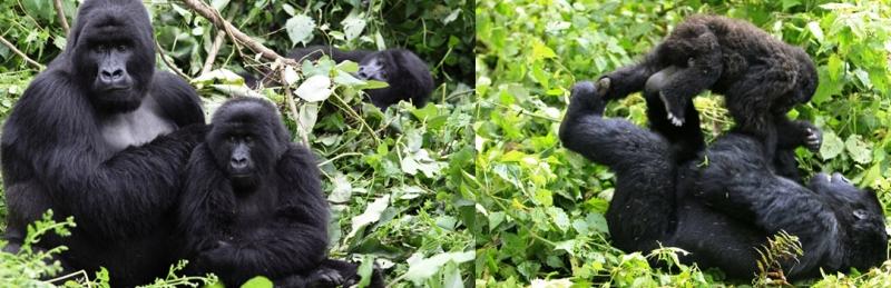 parcs Virunga et Salonga