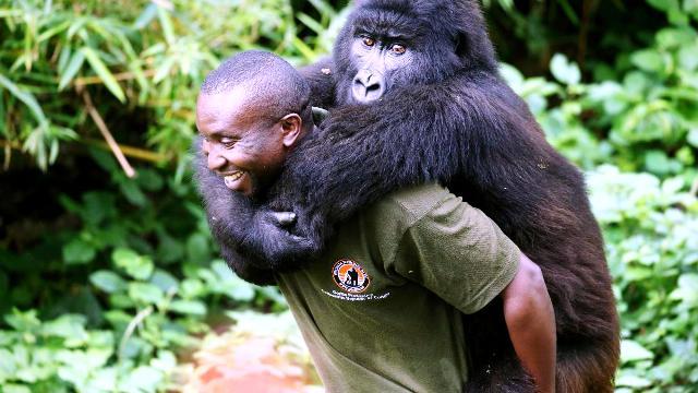 parcs nationaux de Virunga